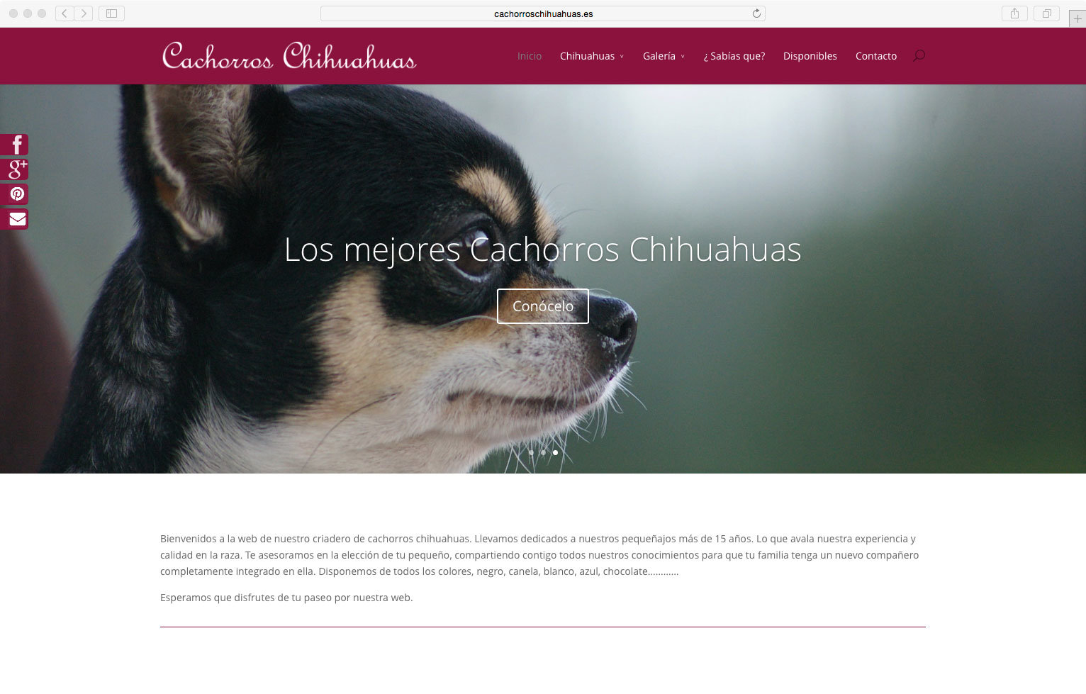 wellaggio diseño web valencia cachorros-chihuahuas